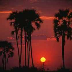 Африканские пейзажи